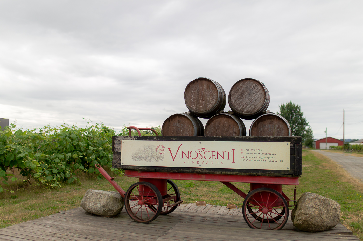 Vinsocenti Vineyards Surrey